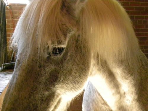 HorseSide