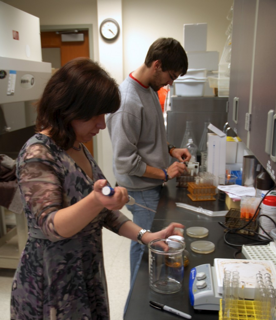 Using viruses that specifically infect bacteria, referred to as bacteriophages, Dr. Robson, Drees and a few other students taking part in the study are testing the bacteriophages against strains of antibiotic resistant staphylococcus aureus, also generally known as Staph Infection.