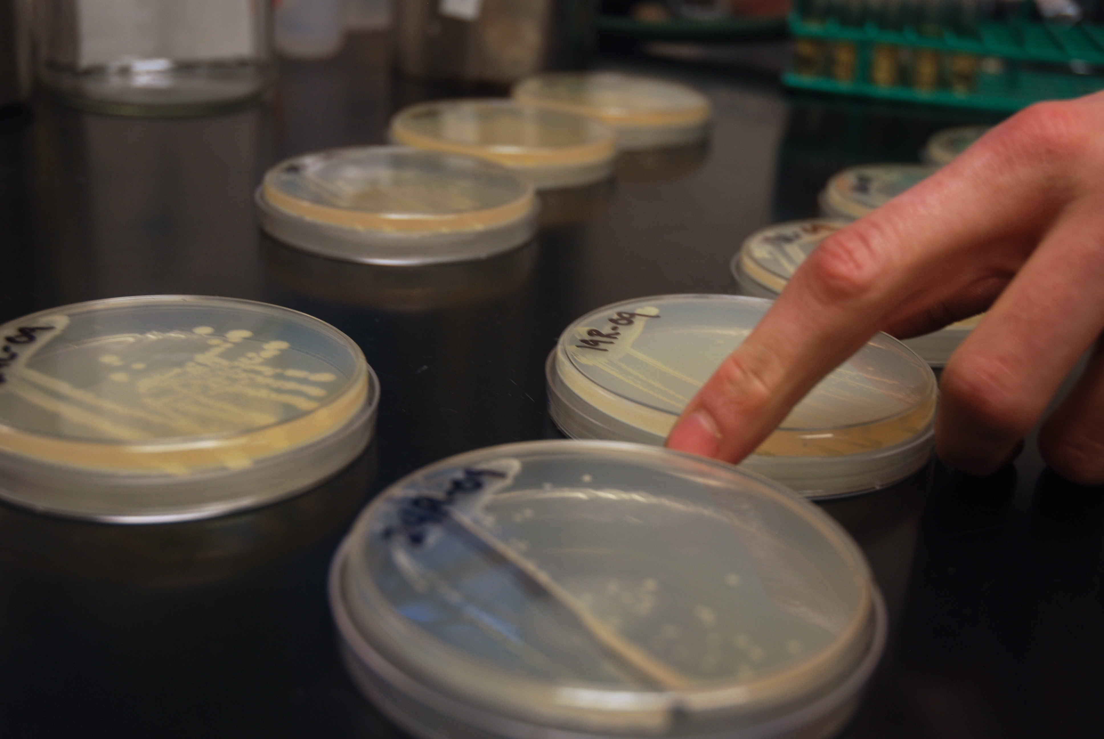 Approximately one-hundred different isolates have been tested during the study.