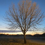 As the sun rises sooner, a new life for the tree is among the horizon.