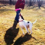 Sports: LeAnn Kuester, Sergeant Bluff, IA, plays frisbee with her dog Cocoa January 22nd.