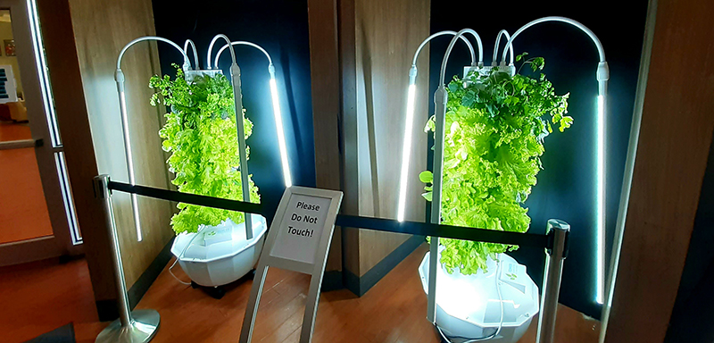 From Tower Garden to Table